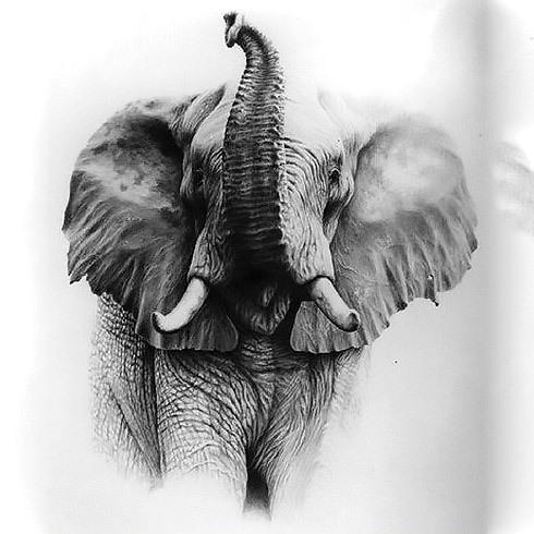 Realistic Beautiful Elephant Tattoo Design