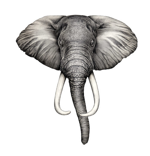 Simple Elephant Head Tattoo Design