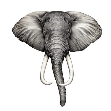 Simple Elephant Head Tattoo