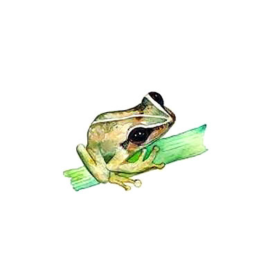 Small Coqui Frog Tattoo Design