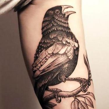 Cool Crow on Bicep Tattoo
