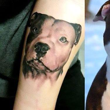 Pitbull Portrait Tattoo