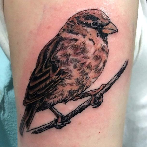 Realistic Sparrow Tattoo Idea
