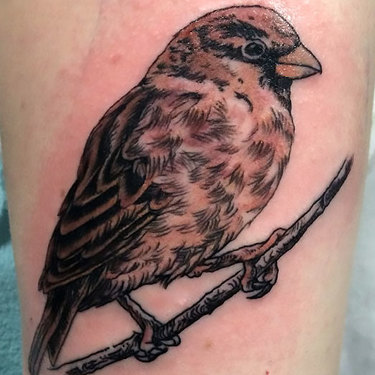 Realistic Sparrow Tattoo