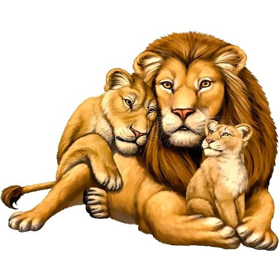 Beautiful Lion Family Tattoo Design