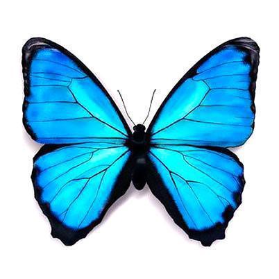 Beautifull Blue Butterfly Tattoo Design