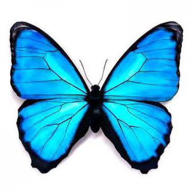 Beautifull Blue Butterfly Tattoo