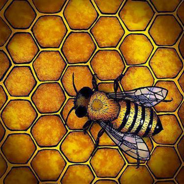 Bee Honeycomb Tattoo