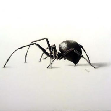 Black Color 3D Spider Realistic Tattoo