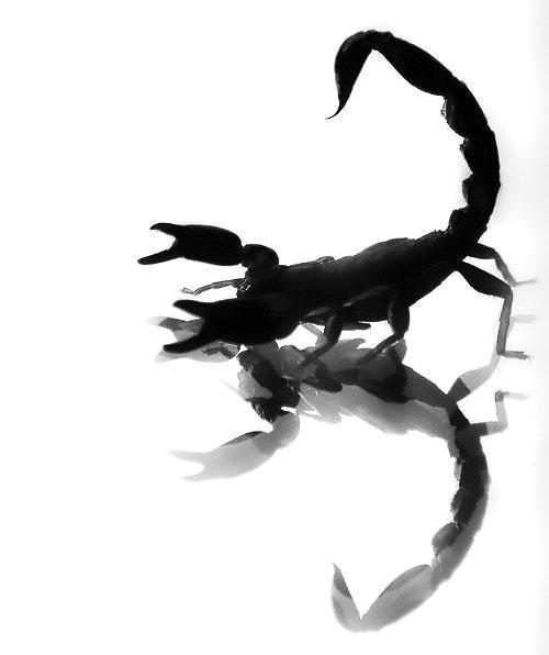 Black Scorpion 3D Tattoo Design
