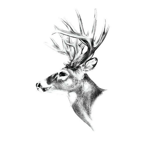 Realistic Deer Head Tattoo Design
