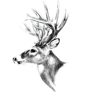 Realistic Deer Head Tattoo
