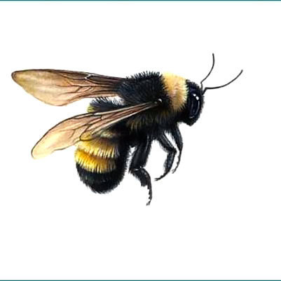 Flying Bumble Bee Tattoo Design
