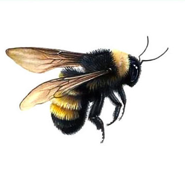 Flying Bumble Bee Tattoo