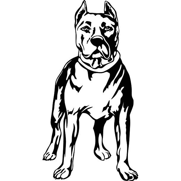 Strong Pitbull Tattoo Design