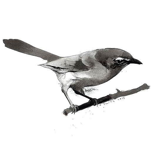 Awesome Songbird Tattoo Design