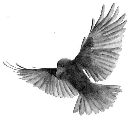 Black and Gray Blackbird Tattoo Design