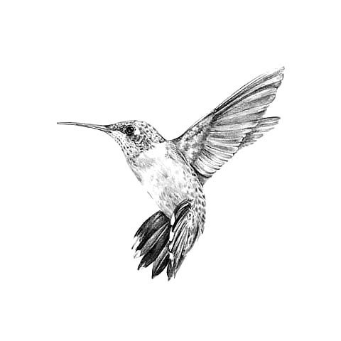 Black and Gray Hummingbird Tattoo Design