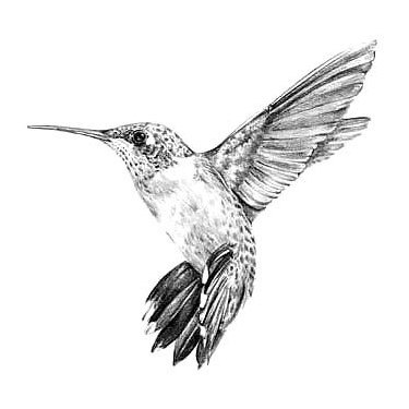 Black and Gray Hummingbird Tattoo