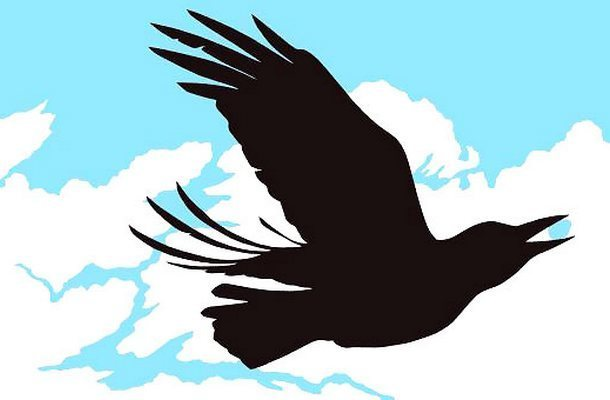 Blackbird In Sky Tattoo Design