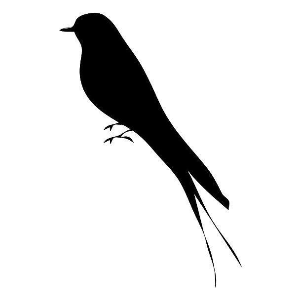 Black Mockingbird Tattoo Design