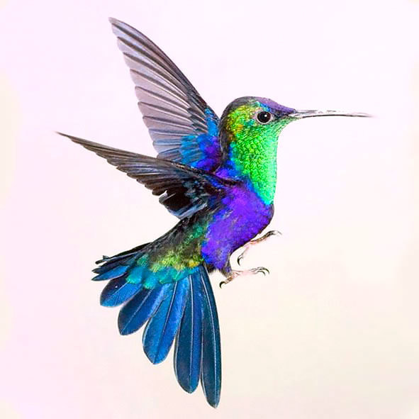 Colorful Hummingbird Tattoo Design