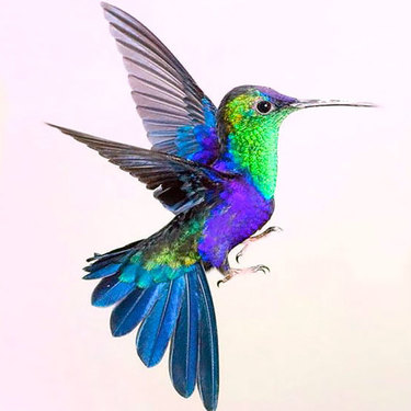 Colorful Hummingbird Tattoo