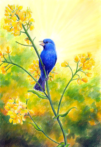 Singing Bluebird Tattoo Design