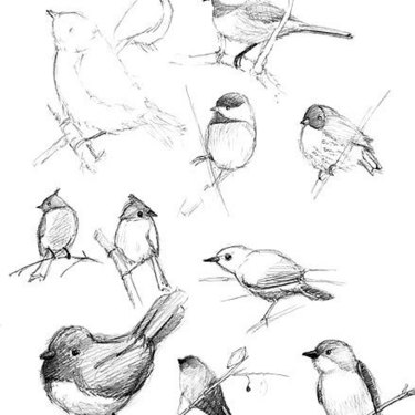 Songbird Tattoo Sketches Tattoo
