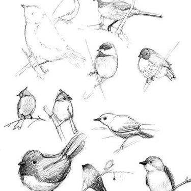 Songbird Tattoo Sketches Tattoo