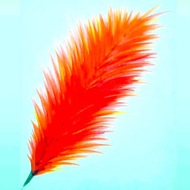 Fire Feather Tattoo