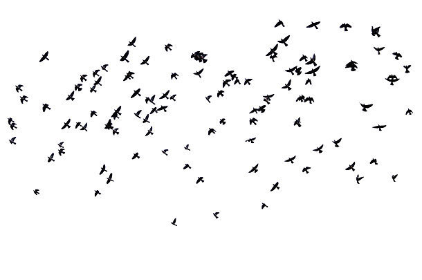 Flock of Birds Tattoo Design