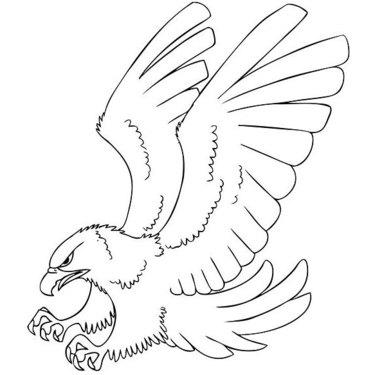 Hawk Outline Tattoo