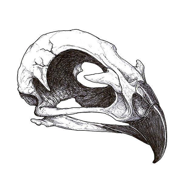 Hawk Skull Tattoo Design
