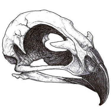 Hawk Skull Tattoo