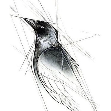 Lined Blackbird Tattoo