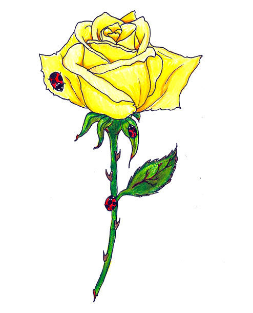Yellow Rose Tattoo Design