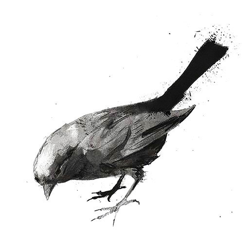 Nice Black and Gray Songbird Tattoo Design