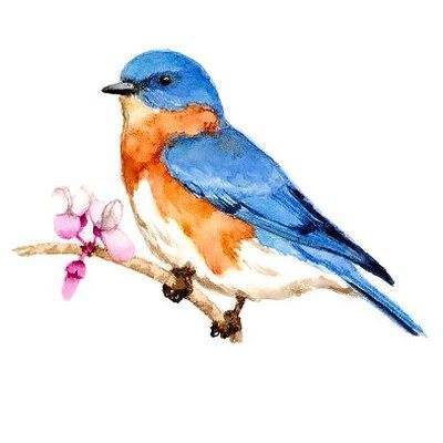 Nice Bluebird on Branch Tattoo Design