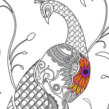 Peacock With Colorful Part Tattoo