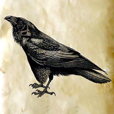 Proud Raven Tattoo Design