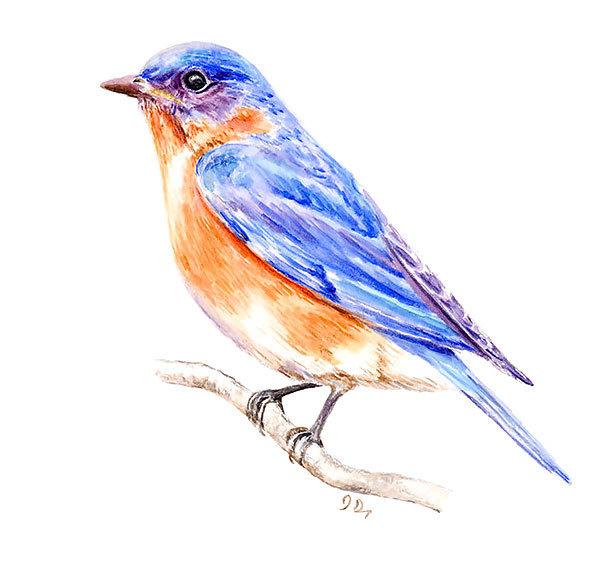 Realistic Bluebird Tattoo Design