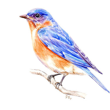 Realistic Bluebird Tattoo