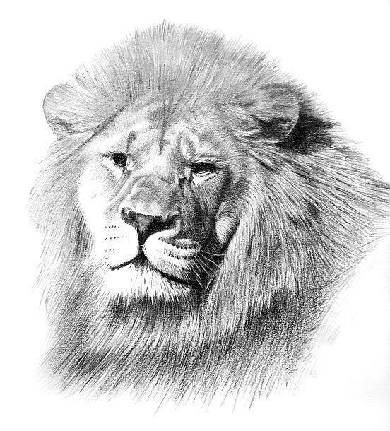 Realistic Lion Tattoo Design