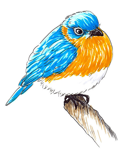 Round Bluebird Tattoo Design
