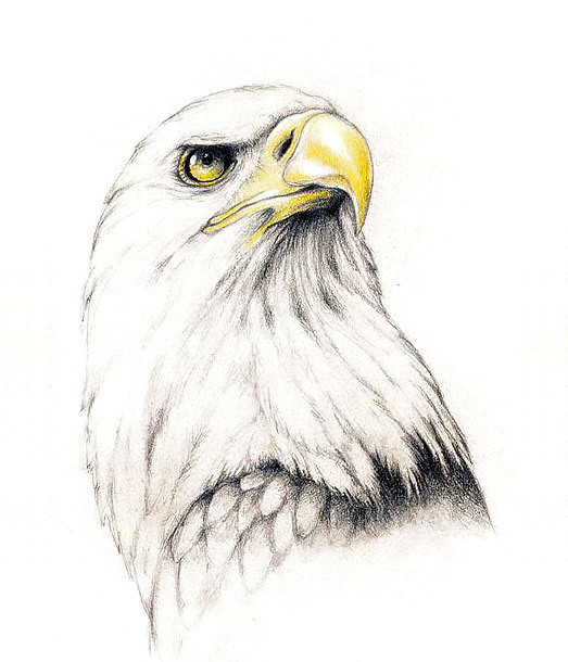 Proud Eagle Tattoo Design