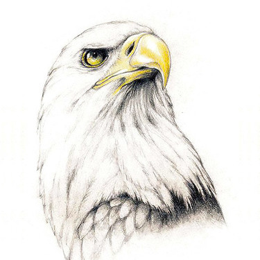 Proud Eagle Tattoo