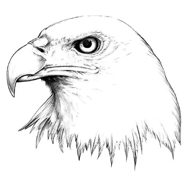 Realistic Eagle Head Tattoo Design