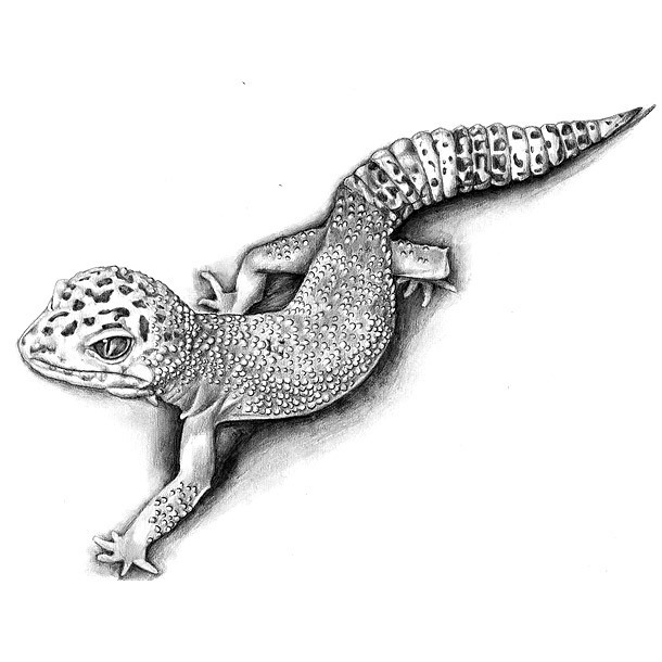 Best Gecko Tattoo Sketch Tattoo Design