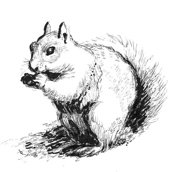 Nice Squirrel Tattoo Design